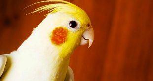 تشخیص علائم بیماری پرندگان