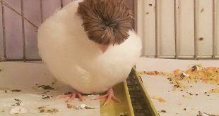 بیماری پرندگان مدفوع