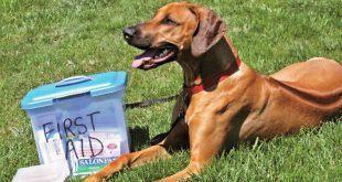 فوریت دامپزشکی اورژانسی سگ