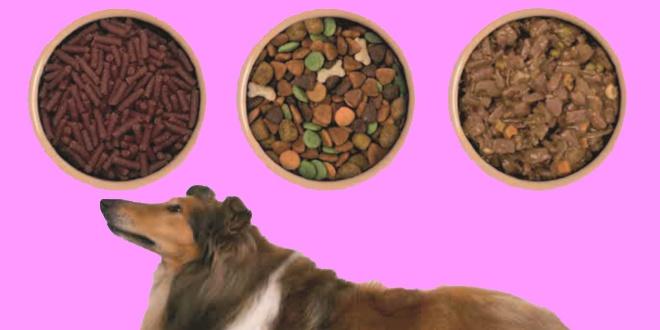 غذا سگ