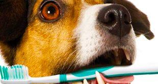 بیماری بوی بد دهان سگ