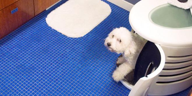 آماده کردن سگ برای حمام کردن