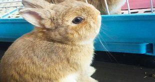 نگهداری خرید خرگوش