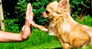 نکات کلیدی آموزش سگ