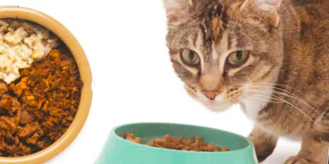 تغذیه گربه مقدار مورد نیاز غذا
