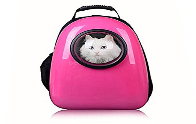 جعبه مخصوص حمل و نقل گربه خانگی