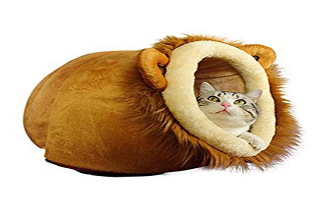 محل استراحت گربه در منزل