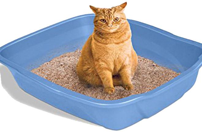 خاک مخصوص مدفوع گربه در منزل