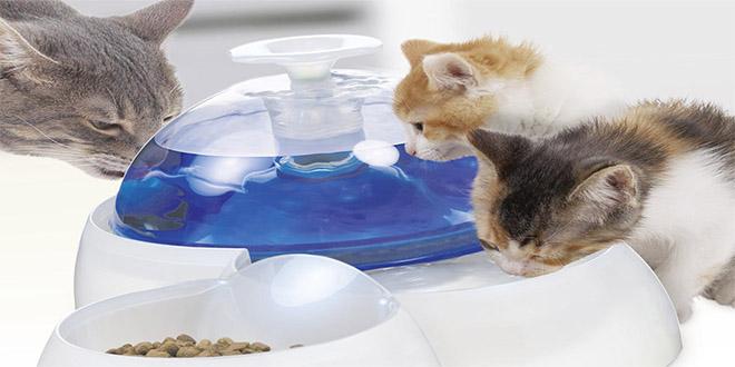 نگهداری گربه در منزل ظرف غذا