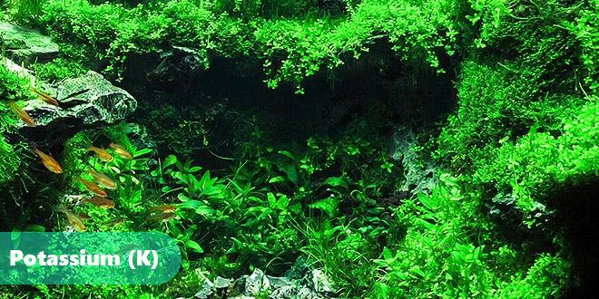 پتاسیم رشد گیاهان آکواریومی