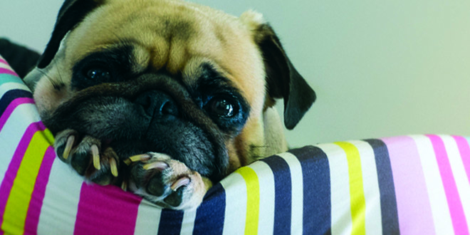 کاهش استرس سگ