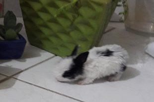 عدم تعادل سر خرگوش