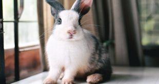 مشکلات دندانی خرگوش