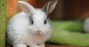 نگهداری از خرگوش