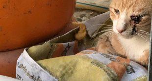 مدیریت زخم در گربه