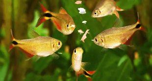 غذا دادن به ماهی