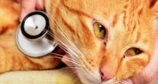 نقص ایمنی گربه