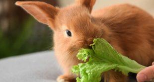 بیماری های پوست خرگوش