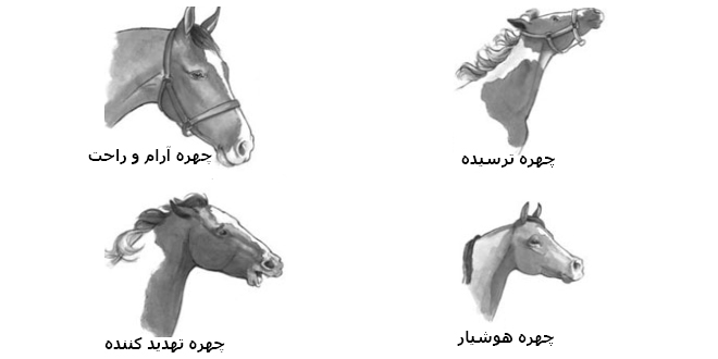 حالت چهره اسب