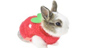 لباس خرگوش