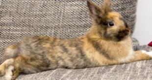 زبان بدن خرگوش